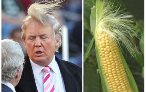 Corny Trump Confirmed