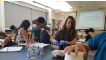 Biomedical students work on a lab in Human Body Systems.