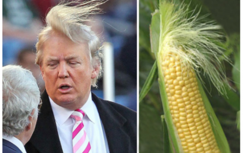 Corny Trump Confirmed